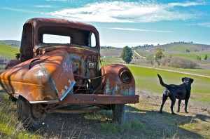 Truck With Black Lab 300x198 OLD TRUCK PHOTOS FEATURED IN YOUTUBE VIDEO PROMOTING COUNTRY SONG