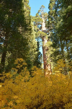 blog d Trek To Two National Parks in California Concludes Photo Outings for 2013